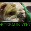 Thumbnail image for DETERMINATION