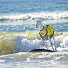 Thumbnail image for Pismo Beach Goats