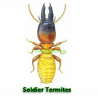 Thumbnail image for Termite … from a Realtors prospective