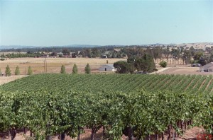 Paso Vineyard Estate 2 300x198 Vineyard Estate in Paso Robles For Sale!